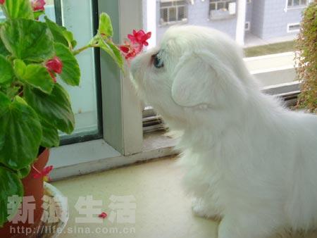 宠物秀:最可爱的宠物宝宝(组图)
