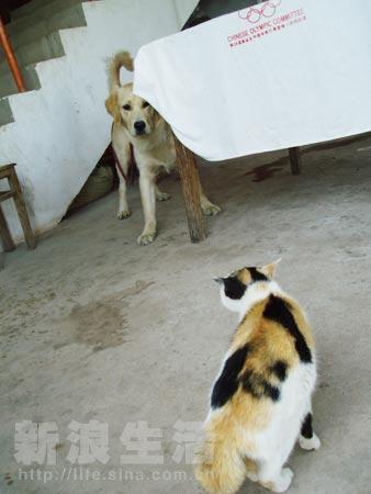 猫狗大战国�y�b9aj:f�_猫狗大战