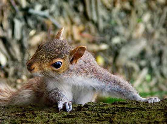 组图:可爱松鼠生活百态