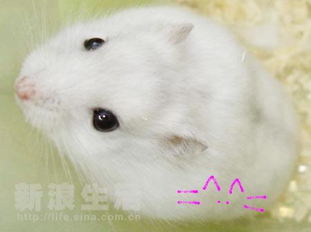可爱的精灵鼠小弟(组图)