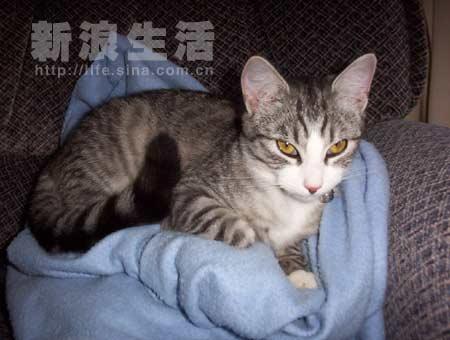 壁纸 动物 猫 猫咪 小猫 桌面 450_340