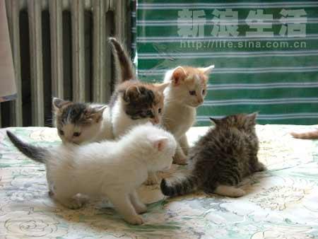 壁纸 动物 狗 狗狗 猫 猫咪 小猫 桌面 450_338