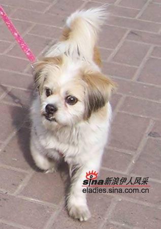 新年狗狗简笔画彩色