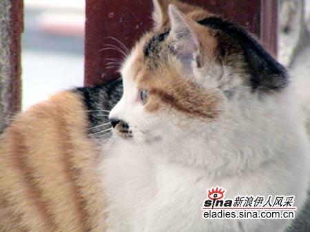 侧面很可爱的猫