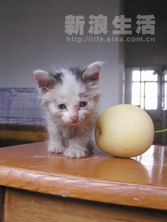 组图:美女小奶猫找妈妈