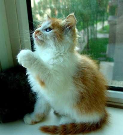 突然俺看见一只小白猫被绳子拴着,再仔细一看,它身上锁骨的位置有一个