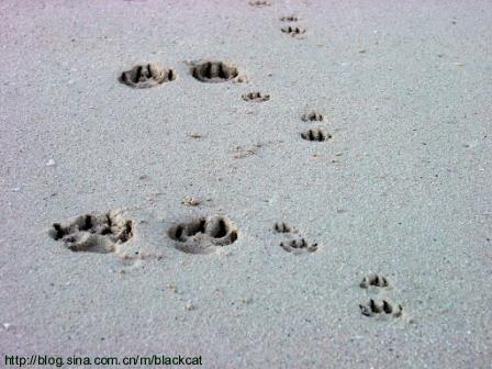 而小脚印是昨夜看到的猫留下的