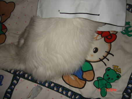 纸袋diy动物