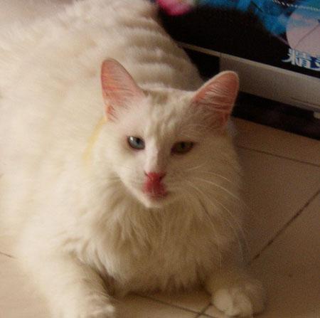 寶貝貓咪的鬼臉大全  【寵物貼圖】 U2062P52T4D124807F159DT20070207135447