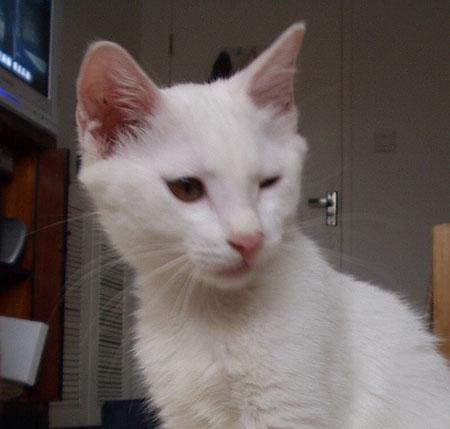 寶貝貓咪的鬼臉大全  【寵物貼圖】 U2062P52T4D124811F159DT20070207135453