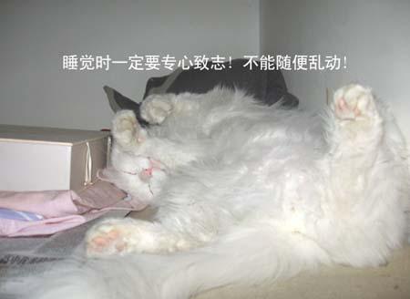 组图:可爱的睡美男猫大亨(3)