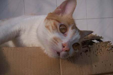 纸盒子做动物牙齿