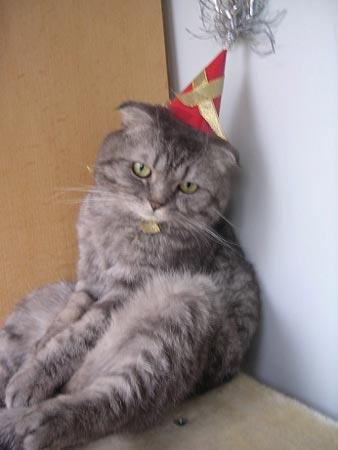 壁纸 动物 猫 猫咪 小猫 桌面 338_450 竖版 竖屏 手机