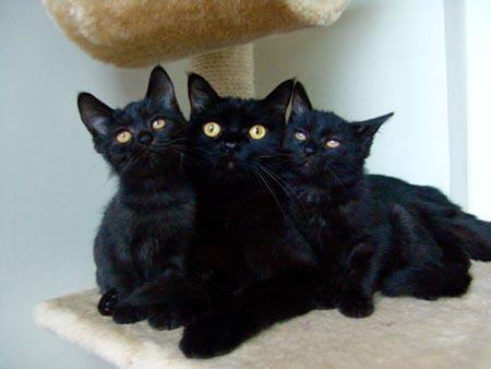发现了两只黑湫湫的小黑猫