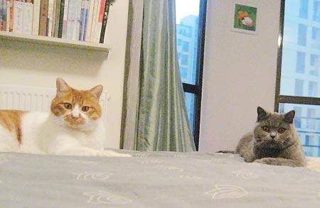 猫咪图片 > 相亲相爱的温馨一家人   猫咪馆网友:7根猫胡子  相亲相爱