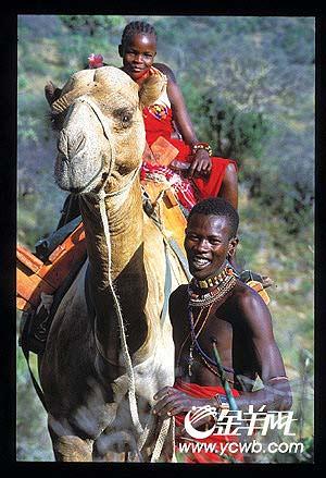 这时我们看到了非洲草原上最迷人的景致——斑马一群一群地在悠闲地