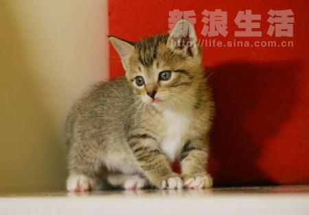 猫猫开心的图片可爱