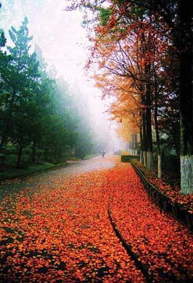 此外,南京东郊钟山风景区也都是一片迷离秋景,人影彩叶,如诗如画.