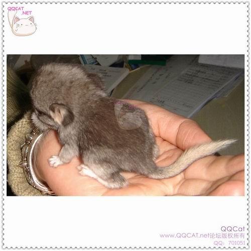 超可爱的动物!有刚出生的小狗哦!