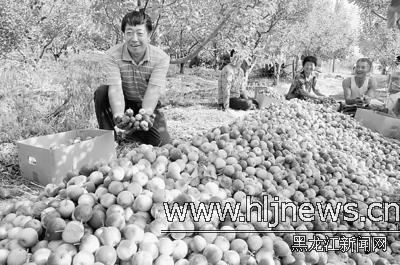 农场金_QQ农场金手套加250仙皇妙用讲解_QQ农场攻