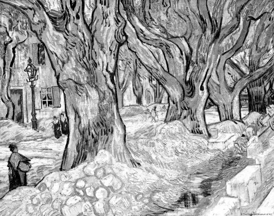 素描青桐树步骤图