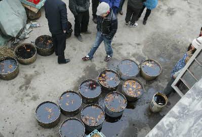 黑作坊废品回收站旁做豆干老板称豆干合格(图)