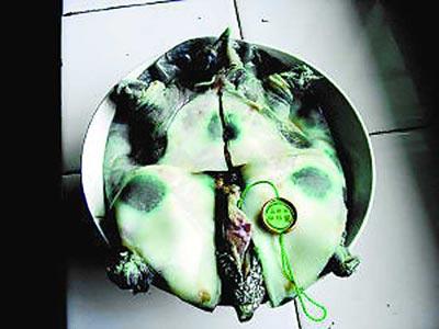 食品安全再拉警报孔雀石绿毒浸鲜鱼(图)