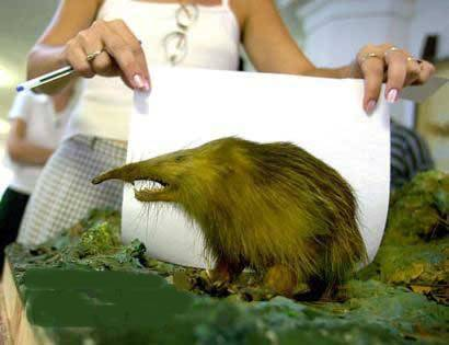 世界10大长相最奇怪的动物