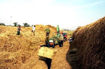 收入证明范本_工资收入证明模板_怎么增加农民收入