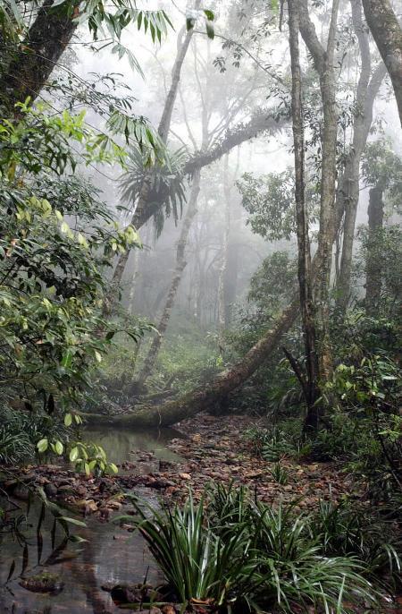 海南岛热带雨林_组图:海南发现大面积原始热带雨林