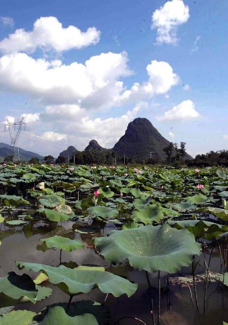 广西钟山县著名的荷塘风景区蓝天白云与