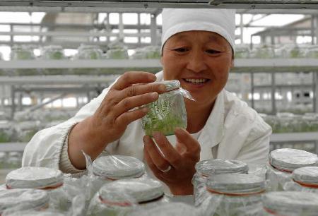 图文:科技扶贫带动马铃薯产业发展(1)