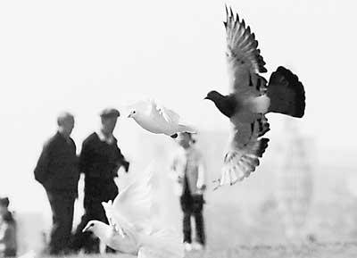 10月5日,一群白鸽在长春文化广场自由飞翔.