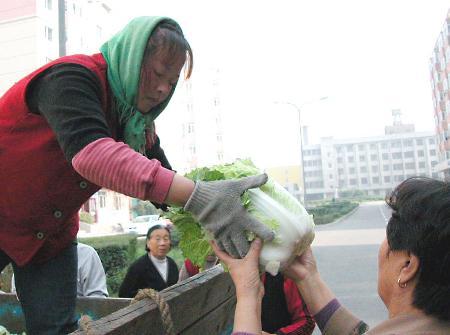 图文:冰城秋白菜销售旺(2)