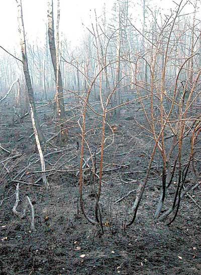 10月19日拍摄的被山火烧过的树林.新华社发