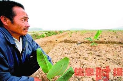 广东37县市上月滴雨未下专家预计可能遭遇暖冬