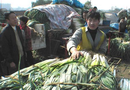 图文:[经济纵横](2)山东今冬蔬菜价格不涨反跌