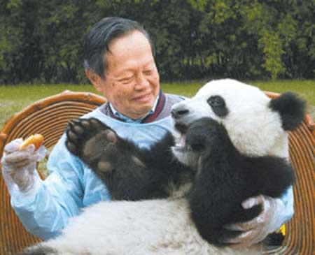 图文:杨振宁在游览成都时与大熊猫合影