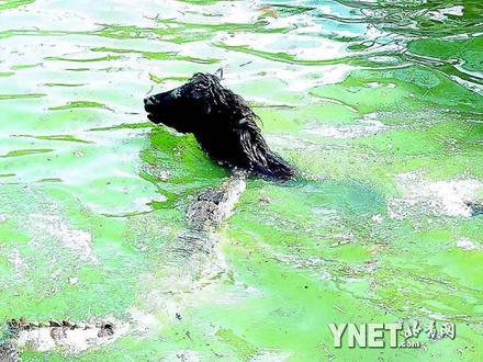 游客买活马喂鳄鱼引来批评公园向社会道歉(组图)