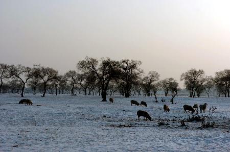 组图:北国风光千里草原盖雪被