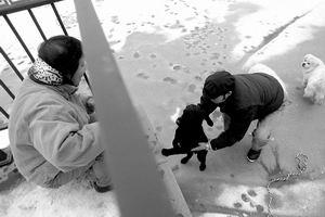 小狗被困河中央冰面俩母狗施美人计救同类(图)