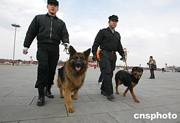 图文:警犬在天安门执行安全检查