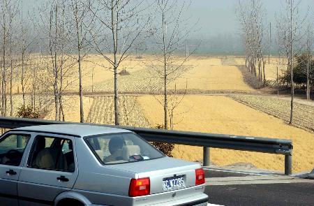 图文:泄漏事故发生地公路边的大片农作物受灾