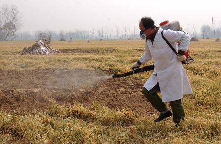 图文:工作人员在掩埋死畜的场地喷洒高效碘伏消毒