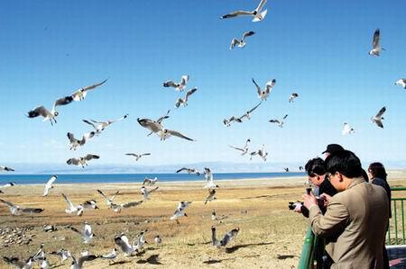 五一前后青海湖国内外观光旅客络绎不绝