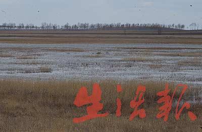 组图:莫莫格自然保护区湿地