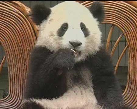 央视《社会记录》:大陆熊猫何时能到海峡对岸