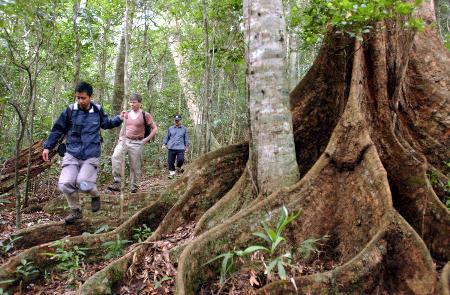 图文:中国最完美的热带雨林(8)