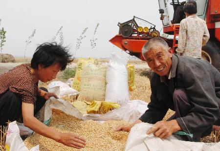图文:[农业经济](3)河北麦收开镰