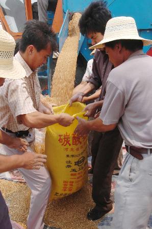 图文:[农业经济](1)河北麦收开镰